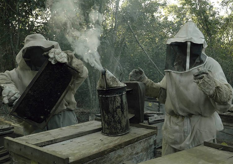 Comunidades mayas y sociedad civil abogan por los derechos de las abejas