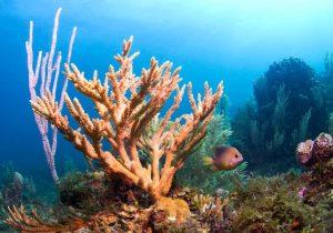 Científicos crean un coral de laboratorio resistente al calentamiento global