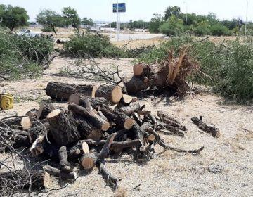 Detienen a seis sujetos por talar árboles sin autorización en Blvd. San Marcos
