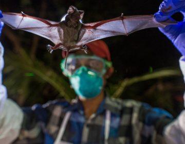 """""""Cazadores de virus"""", los científicos que exploran cuevas de murciélagos para prevenir pandemias"""