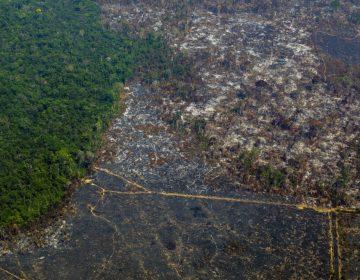Más de 4,000 km2 deforestados en la Amazonía Brasileña están en riesgo de incendiarse en 2020