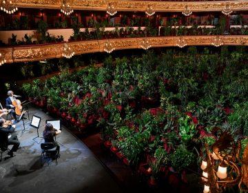 Auditorio Liceu de Barcelona reabre con un concierto para 2,292 plantas