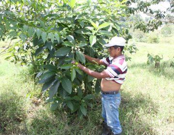 El asesinato de un líder espiritual maya a quien acusaron de brujería indigna a Guatemala
