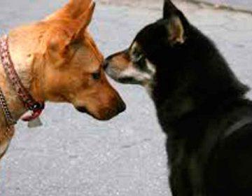 +Kota busca familias que adopten perros y gatos