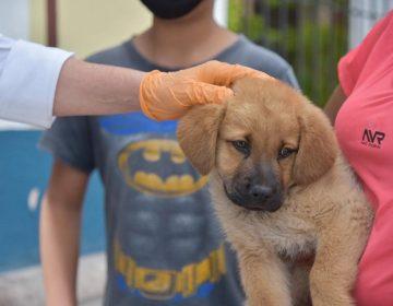 Se realizó jornada de vacunación contra la rabia en mascotas de Jesús María