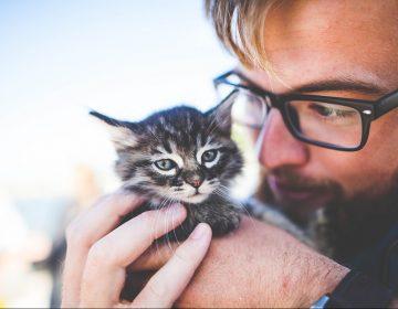 """Fotos de hombres con gatos son percibidos como """"menos masculinos"""": estudio"""