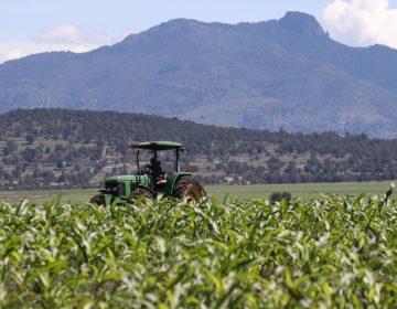 México suspende temporalmente envío de trabajadores a Canadá, tras la muerte de dos mexicanos por COVID