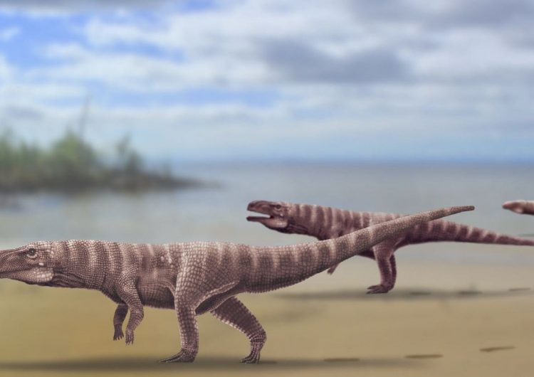 Especies de antiguos cocodrilos caminaban sobre sus dos patas traseras: estudio