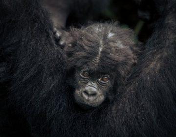 Las actividades humanas están acelerando la extinción masiva de los animales, advierte estudio