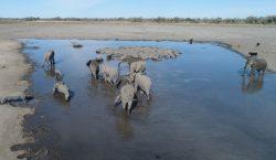 La misteriosa muerte de 275 elefantes preocupa a Botsuana