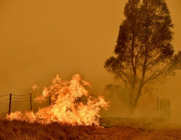 Al menos 3,000 millones de animales murieron o fueron desplazados por los incendios forestales en Australia