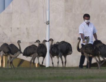 Jair Bolsonaro da positivo a su segunda prueba de coronavirus