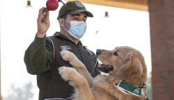 La policía chilena adiestra perros para intentar detectar a infectados…
