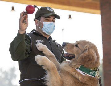 La policía chilena adiestra perros para intentar detectar a infectados de COVID-19
