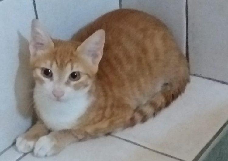 """""""Pupi"""", el gatito migrante que sobrevivió a la travesía… y ahora respeta la cuarentena"""