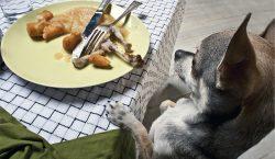 ¡No le des las sobras de comida a tu mascota,…