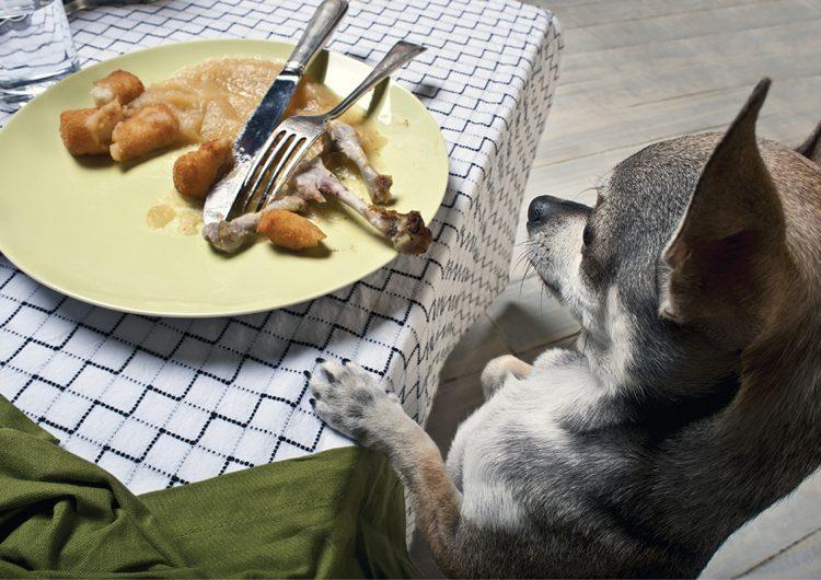 ¡No le des las sobras de comida a tu mascota, la perjudicarás!