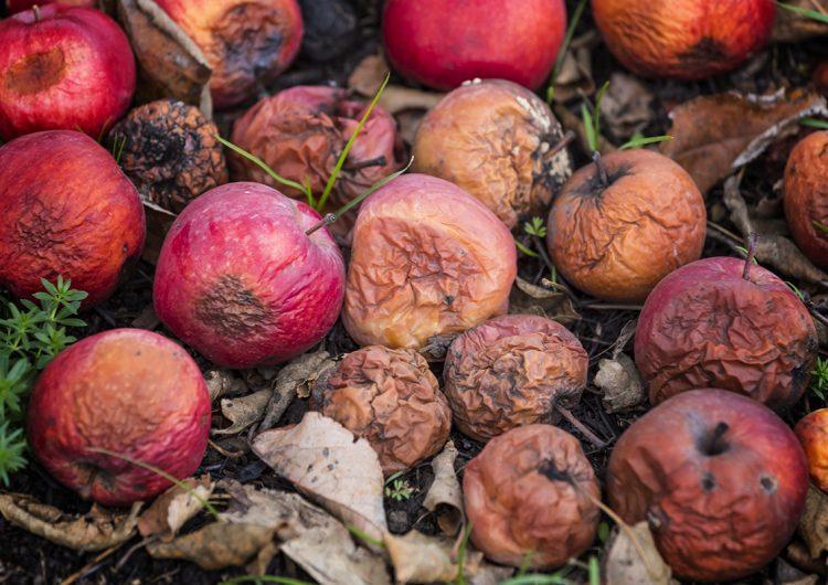 El desperdicio de comida, un hábito peligroso que hay que erradicar
