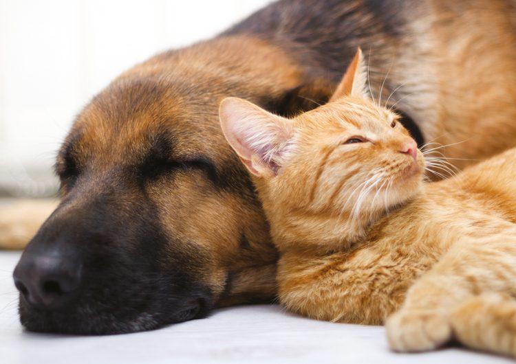 Mascotas y COVID-19: ¿cómo cuidarlas en plena pandemia?