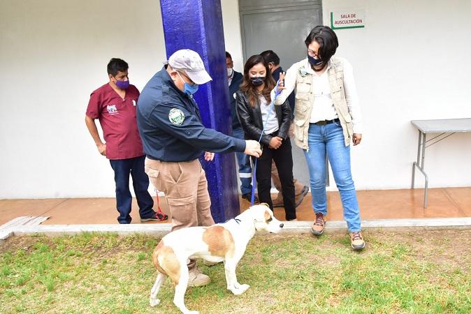 "Entrega municipio de Aguascalientes a perro ""Solovino"" a la PROESPA"