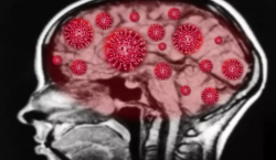 El coronavirus podría estar haciendo que nuestros anticuerpos ataquen el…