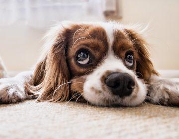 """¿Cuál es la edad de tu perro en """"años humanos""""? Usa esta gráfica creada por científicos para averiguarlo"""