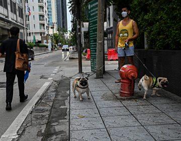 Dos paseos al día: Alemania presenta ley para que dueños ejerciten a sus perros
