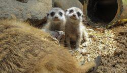 """El """"boom"""" de crías en un zoológico colombiano durante la…"""