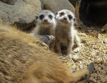 """El """"boom"""" de crías en un zoológico colombiano durante la pandemia"""