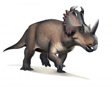 Diagnostican por primera vez un cáncer maligno en un dinosaurio