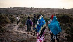 Más de 1,200 migrantes murieron en la primera mitad de…