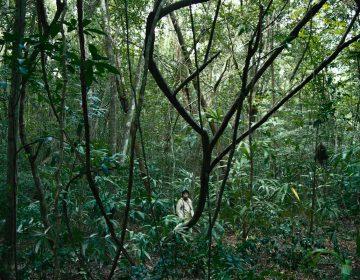'Selva trágica', el drama fílmico de una mexicana que pisará tres festivales mundiales