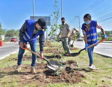 Embellecerán con 200 árboles la Av. Independencia en Jesús María
