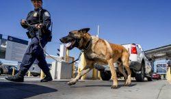 Video muestra cómo un policía ordena a su perro que…