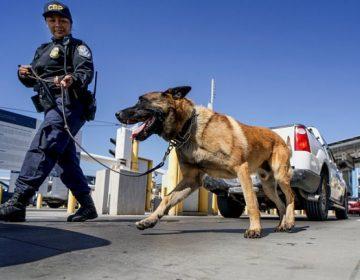 Video muestra cómo un policía ordena a su perro que ataque a un hombre negro arrodillado
