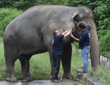 35 años después, el único elefante de Pakistán por fin saldrá libre del zoológico