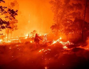 Incendios en California alcanzan récord: han devastado más de 800,000 hectáreas en 2020