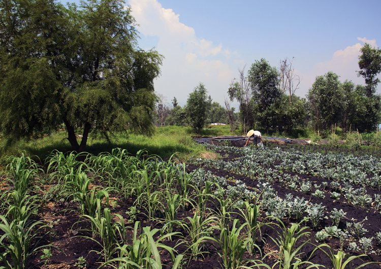 La chinampa: el origen de la cocina mexicana en la gran capital