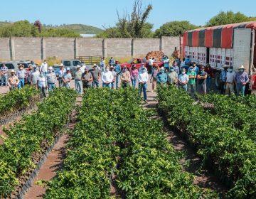 Entrega SEDRAE apoyos a productores de limón de Calvillo