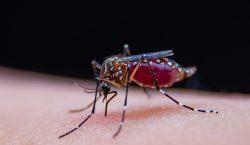 ¿El dengue protege contra el coronavirus? Científicos desconfían de esta…