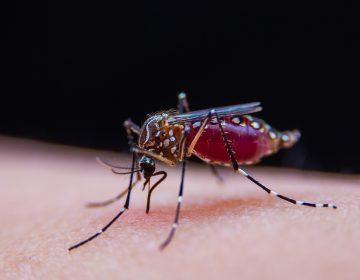 ¿El dengue protege contra el coronavirus? Científicos desconfían de esta teoría
