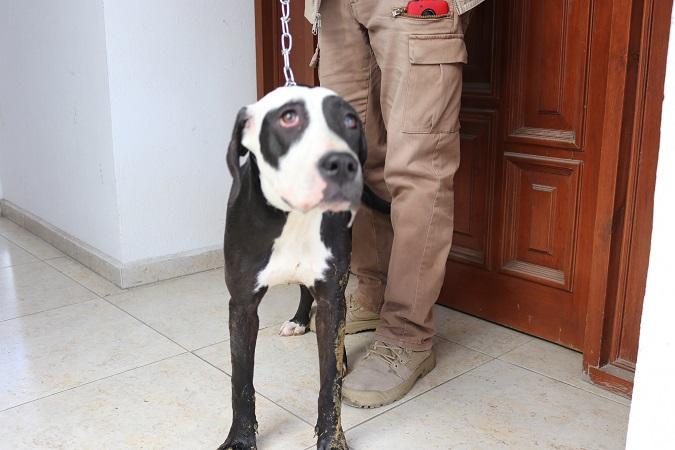 Resguarda PROESPA a perro maltratado por su dueño en Aguascalientes