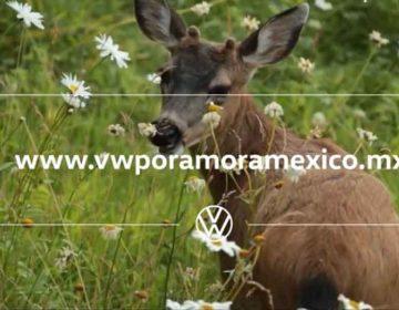 VW en pro del medio ambiente y biodiversidad