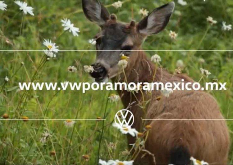 VW busca proyectos en pro del medio ambiente y biodiversidad