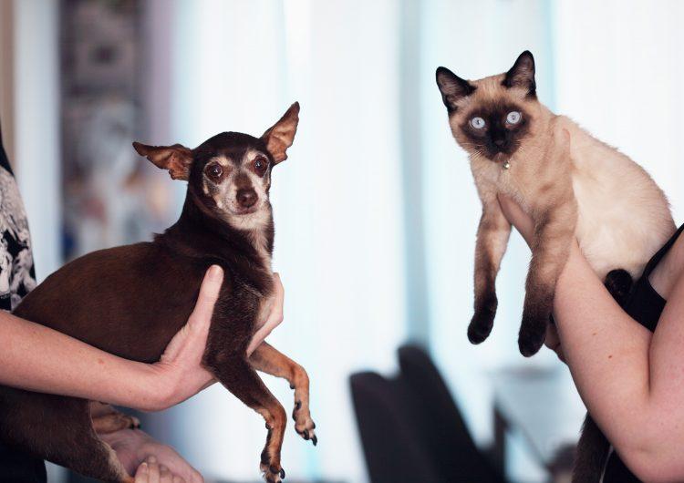 Invitan a campaña de vacunación antirrábica para mascotas en BC
