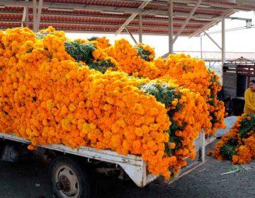 Pese a panorama adverso, repunta venta de flor de cempasúchil en Atlixco