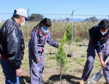 UTP realiza plantación de árboles y reciclaje