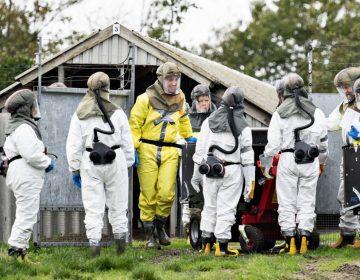 Dinamarca sacrificará millones de visones por mutación de coronavirus que infectó a humanos