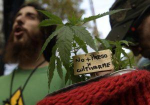 Senado aprueba en lo general la regulación de mariguana; sigue criminalización a usuarios