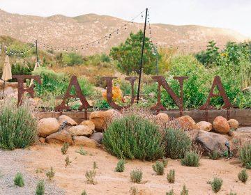 Dan premio internacional a Fauna, restaurante en Valle de Guadalupe